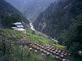 Beekeeping In Naran Valley.jpg