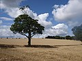 Before the harvest - geograph.org.uk - 2544350.jpg