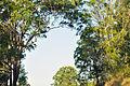 Belli Park Sunshine Coast Queensland Australia (18).jpg