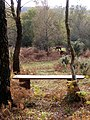 Bench above Crow's Nest Bottom, Pipers Wait, New Forest - geograph.org.uk - 274855.jpg