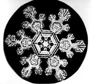 A picture of a Snow Crystal taken by Wilson Be...