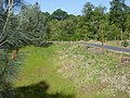 Bike trail meadow and newly-planted oaks - panoramio.jpg