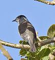 Bird1 (5489561898).jpg