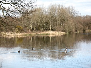Ripon Parks Site of Special Scientific Interest in North Yorkshire, England