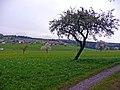 Blick Richtung Unterkollbach - panoramio.jpg