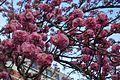 Bloom @ Jardin Pierre-Adrien Dalpayrat @ Paris (32963599223).jpg