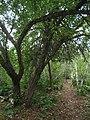 Bloomfield Provincial Park IMG 8154 (1849011712).jpg