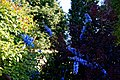 Blue delphinium cultivar in Essex, England.jpg