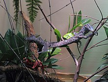 Blue tree monitor 10.jpg