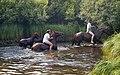 Bob's Wild West Adventures, Elm Creek (340227) (24104192813).jpg