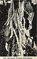 Bolgiano's spring 1967 catalog (1967) (20391178025).jpg