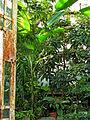 Botanička bašta Jevremovac, Beograd - unutrašnjost staklene bašte 01.jpg