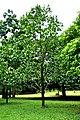 Botanic garden limbe63.jpg