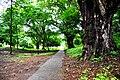 Botanic garden limbe86.jpg