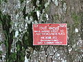 Botanical Garden of Peradeniya 65.JPG