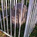 Boundary Stone (District of Columbia) NE 5.jpg