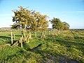 Boundary fence - geograph.org.uk - 1508745.jpg