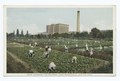 Boys Gardens, The National Cash Register Co., Dayton, Ohio (NYPL b12647398-79527).tiff