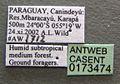 Brachymyrmex aphidicola casent0173474 label 1.jpg
