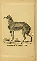 Breeding, training, management, diseases and c. of dogs- (1877) (14596338289).jpg