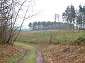Brickhouse Wood from Black Forest - geograph.org.uk - 155479.jpg