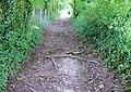 Bridleway to Sparsholt - geograph.org.uk - 930128.jpg