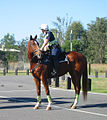 Brisbane Valley Rail Trail Police horse at Fernvale 2010.jpg