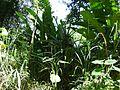 Bromélia em meio a folhagens 2.jpg