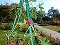 Bryonia cretica subsp. dioica 2015-10-03 6010.jpg
