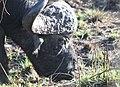 Buffalo bull (10900958074).jpg