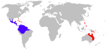 Distribuzione di Rhinella marina. In blu le zone di cui è nativo, in rosso quelle dove è stato introdotto.