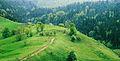 Bukuritë e Maleve të Rugovës.JPG