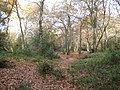 Burnham Beeches, Iron Age hill fort - geograph.org.uk - 1046539.jpg