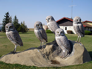 Leader, Saskatchewan - Burrowing Owls