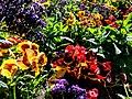Butchart Gardens - Victoria, British Columbia, Canada (29111652430).jpg