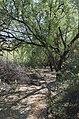 Butcher Jones Trail, Burro Cove and Beyond, Tonto National Park, Arizona - panoramio (34).jpg