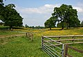 Buttercups at Cholmondeley Park - geograph.org.uk - 815243.jpg