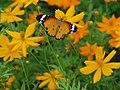Butterfly (4848900411).jpg