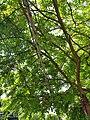 Cable sheath - Arlington, MA - 20200704 100212.jpg