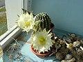 Cactus - panoramio - sokol336 (15).jpg