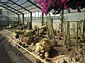 Cactus in greenhouse near Mountain Hell Hot Spring.JPG