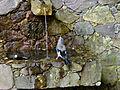 Calenzana Geai fontaine de Bonifatu.jpg