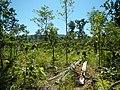 Cambodia 2014 - panoramio (12).jpg