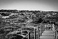 Caminho das dunas - Cascais.jpg