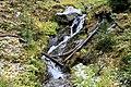 Canadian Rockies Alpine Meadow Stream.jpg