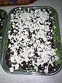 Carpaccio z červené řepy a kozí sýr - zahradní raut 41.jpg