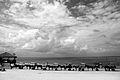 Carroças na Ilha de Maiandeua (Algodoal).JPG