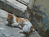 A cat with it's small kitten somewhere in the streets of Makkah