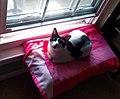 Cat on pink towel.jpg