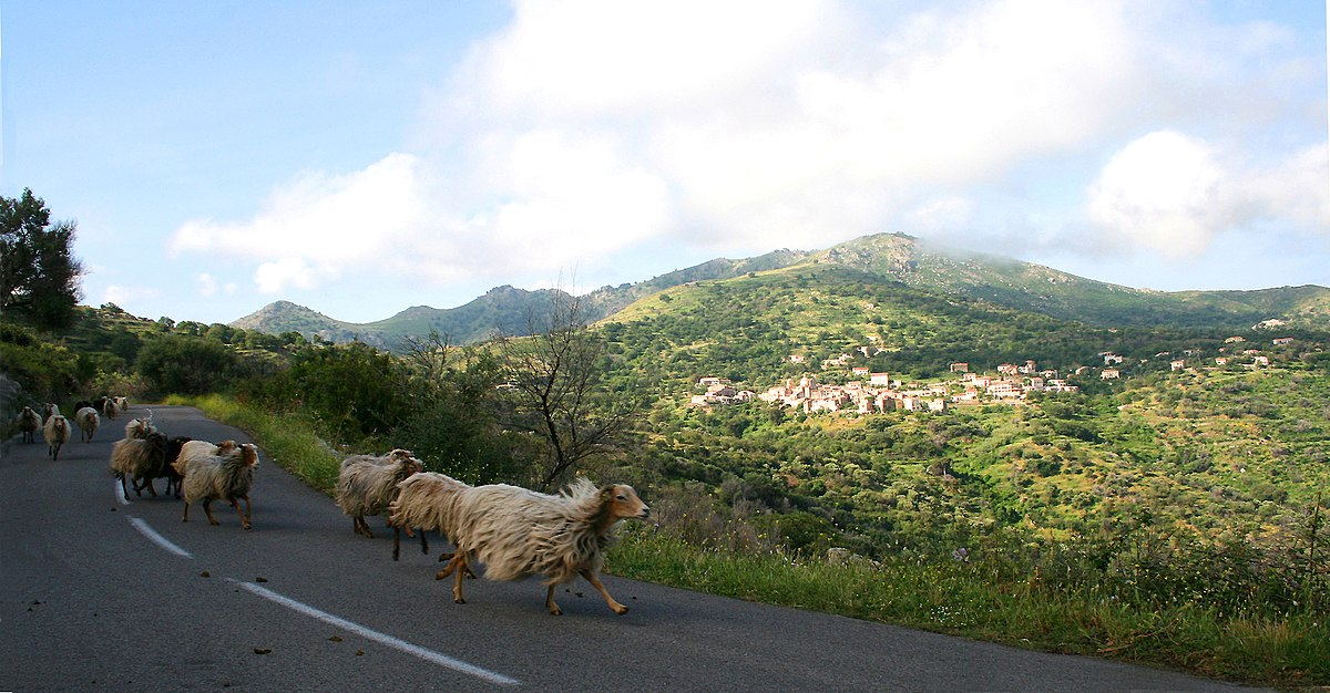 Corse (race ovine)